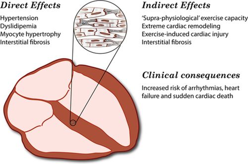 Steroids for cardio endurance university of british columbia faculty of pharmaceutical sciences
