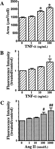 Inhibitory Effects Of Antioxidants On Neonatal Rat Cardiac Myocyte Hypertrophy Induced By Tumor Necrosis Factor A And Angiotensin Ii Circulation