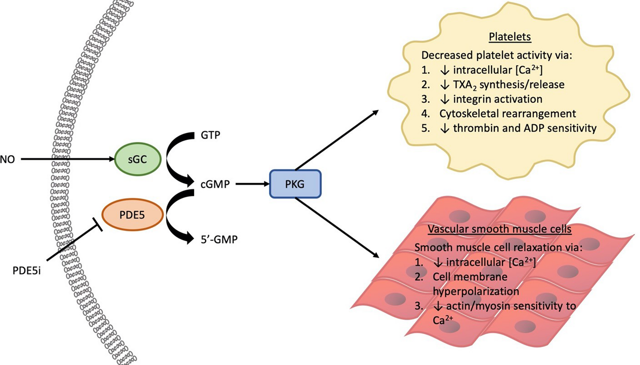 Phosphodiesterase‐12 Inhibitor Therapy for Left Ventricular Assist ...