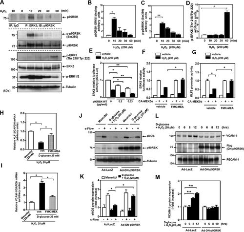 A Crucial Role for p90RSK-Mediated Reduction of ERK5