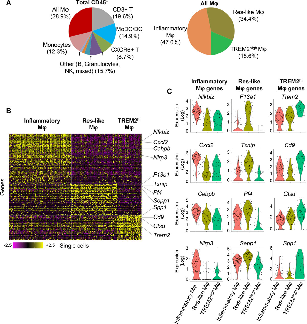 Single-Cell RNA-Seq Reveals the Transcriptional Landscape and
