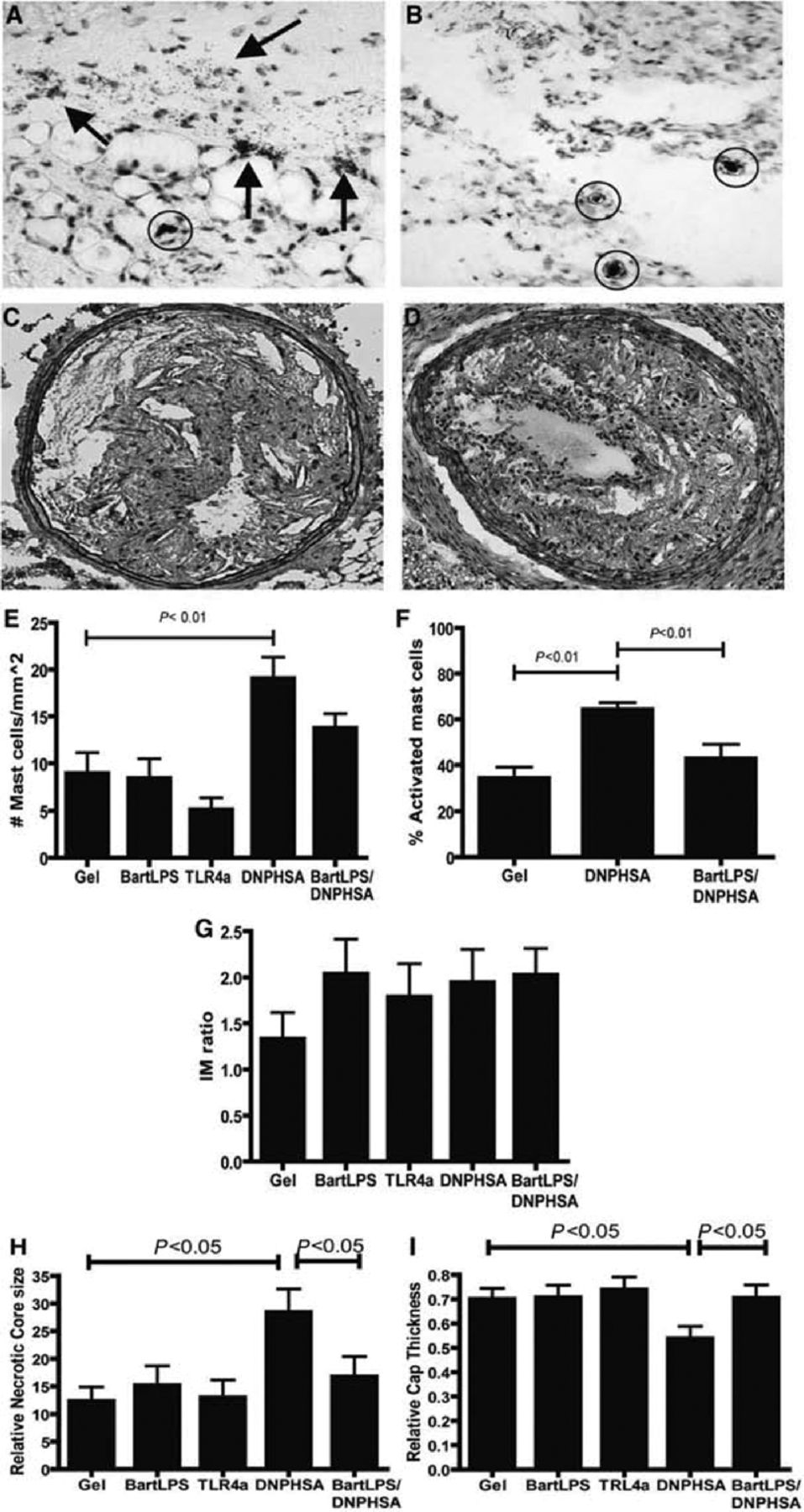 Mast Cells Induce Vascular Smooth Muscle Cell Apoptosis via