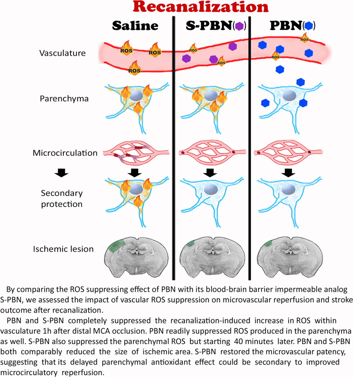 Improving Microcirculatory Reperfusion Reduces Parenchymal