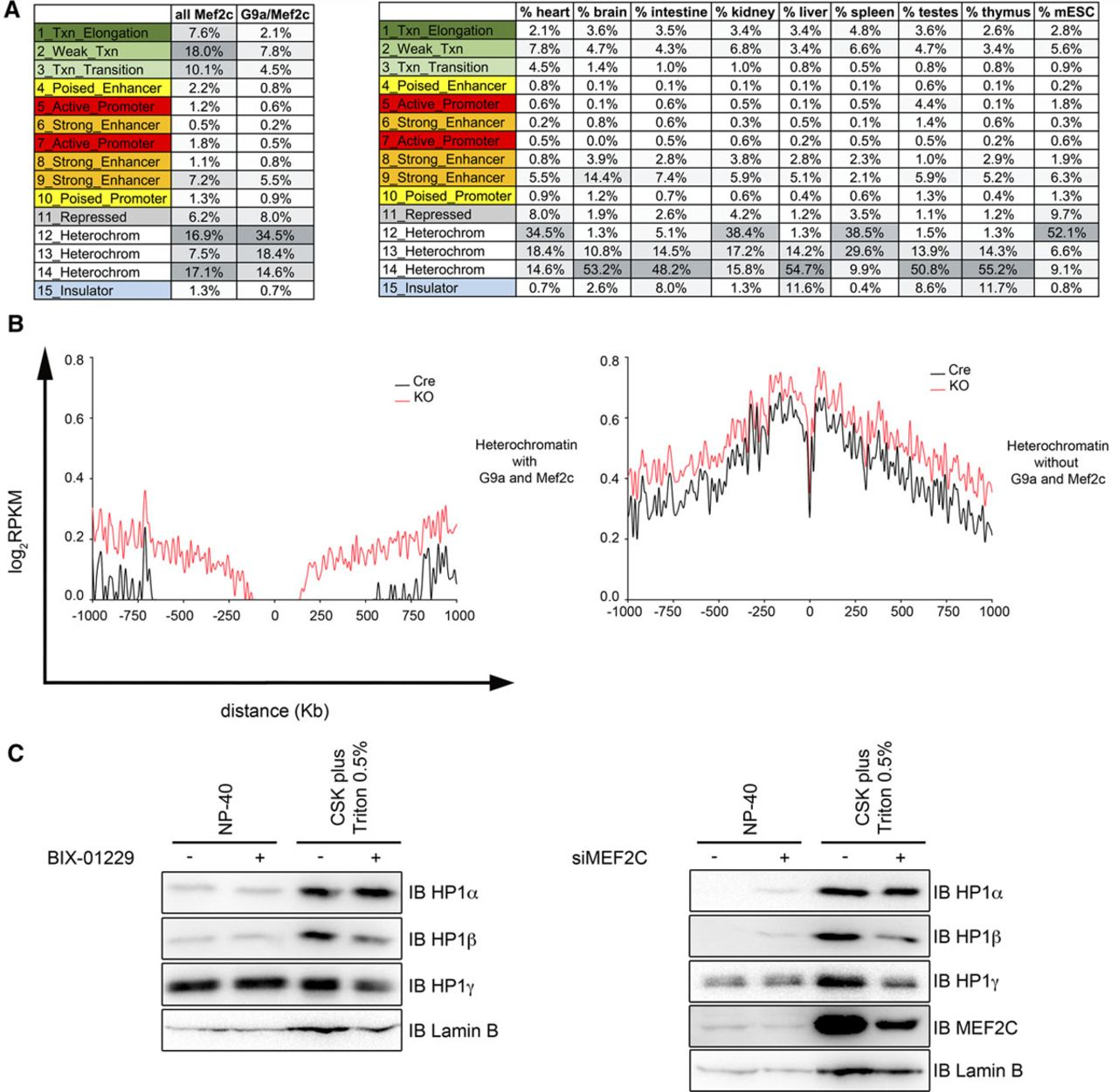 Histone Methyltransferase G9a Is Required for Cardiomyocyte