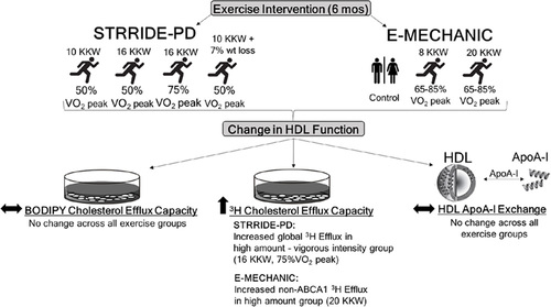 Effects of Increasing Exercise Intensity and Dose on