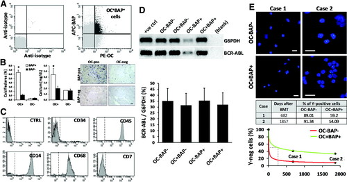 Widespread Increase in Myeloid Calcifying Cells Contributes