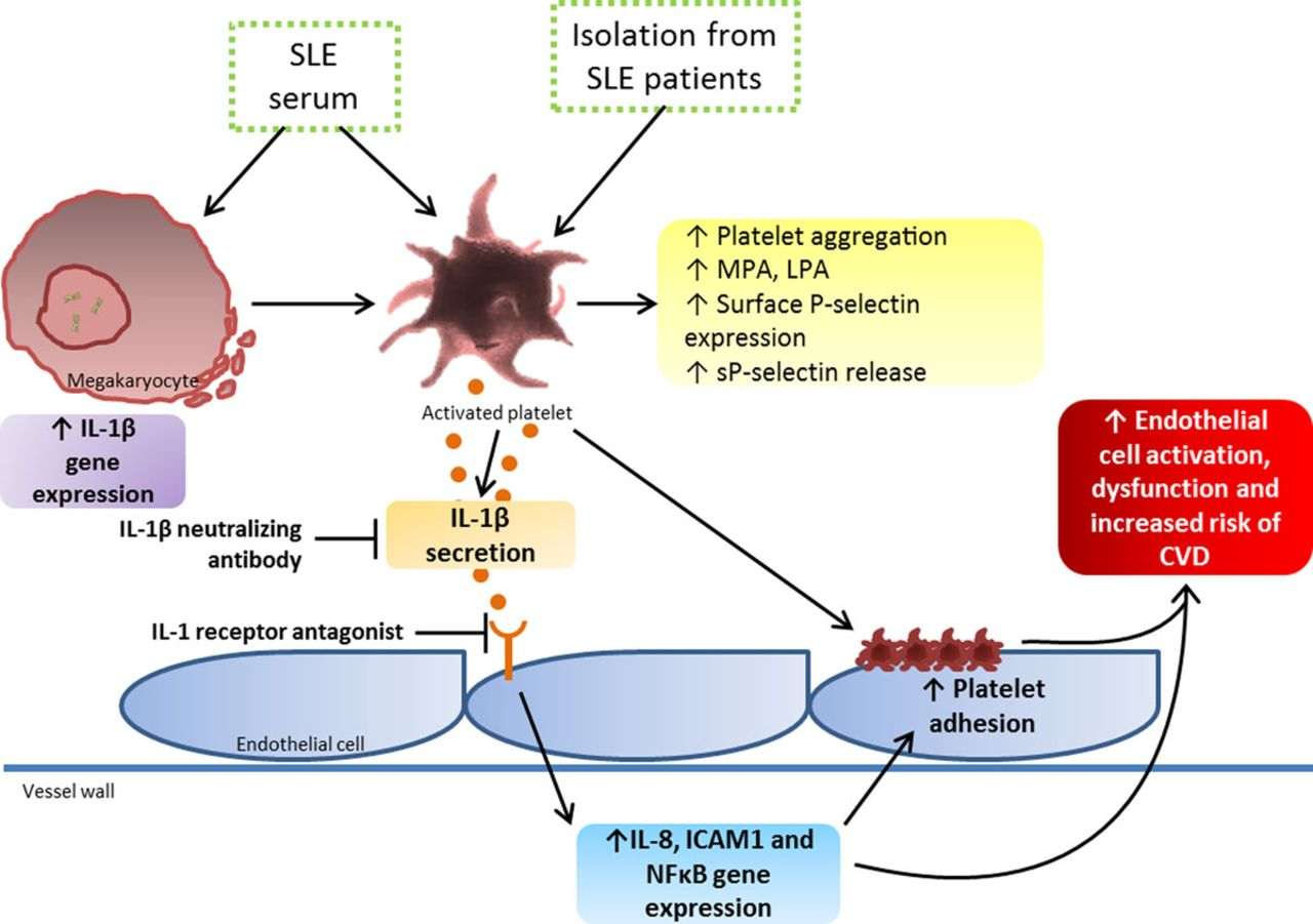 platelet activation markers