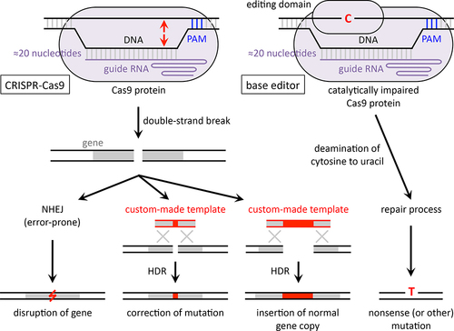 CRISPR-Cas9 Genome Editing for Treatment of Atherogenic