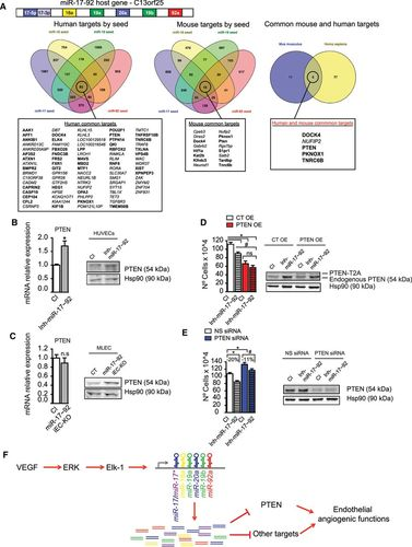 VEGF-Induced Expression of miR-17–92 Cluster in Endothelial