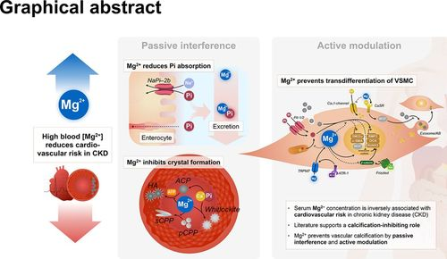 Magnesium Counteracts Vascular Calcification | Arteriosclerosis