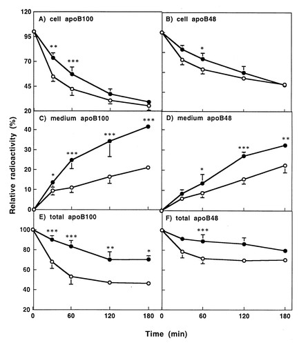 Effects Of Dexamethasone On The Synthesis Degradation And