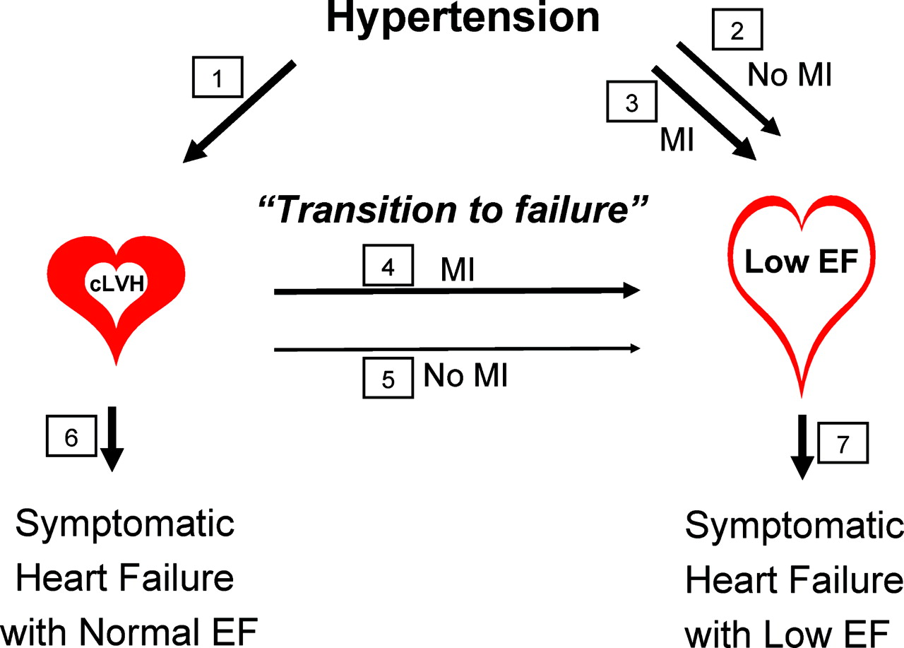 The Progression Of Hypertensive Heart Disease Circulation