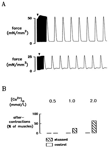 Relationship Between Intracellular Calcium and Contractile