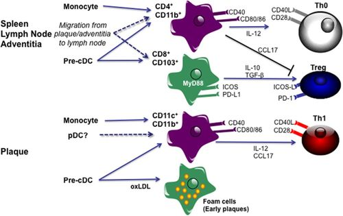 Adaptive (T and B Cells) Immunity and Control by Dendritic Cells in