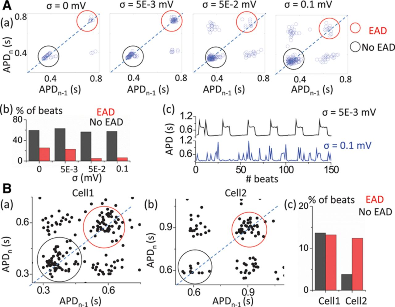 Slow [Na]i Changes and Positive Feedback Between Membrane Potential