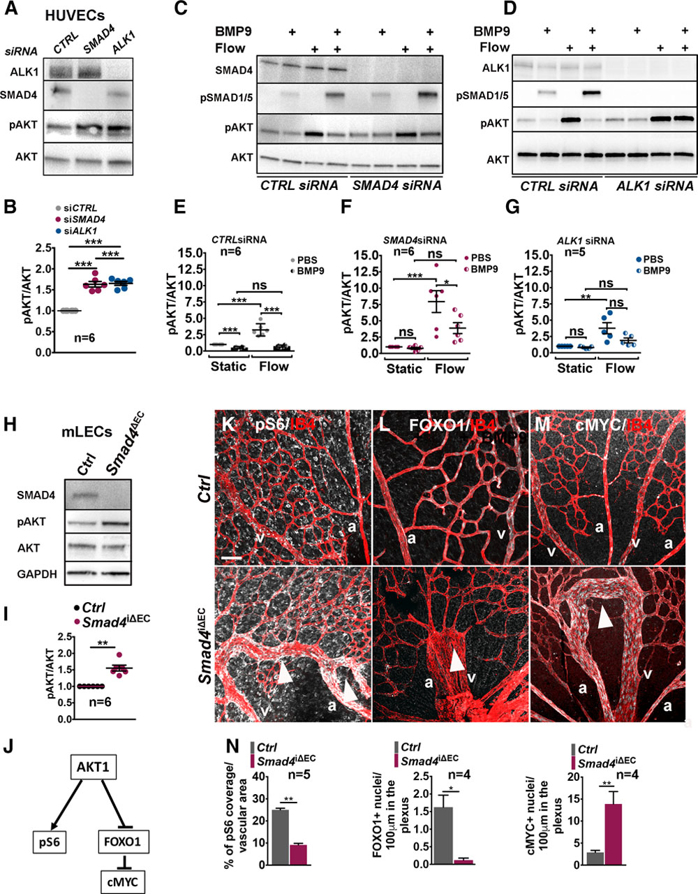 SMAD4 Prevents Flow Induced Arteriovenous Malformations by