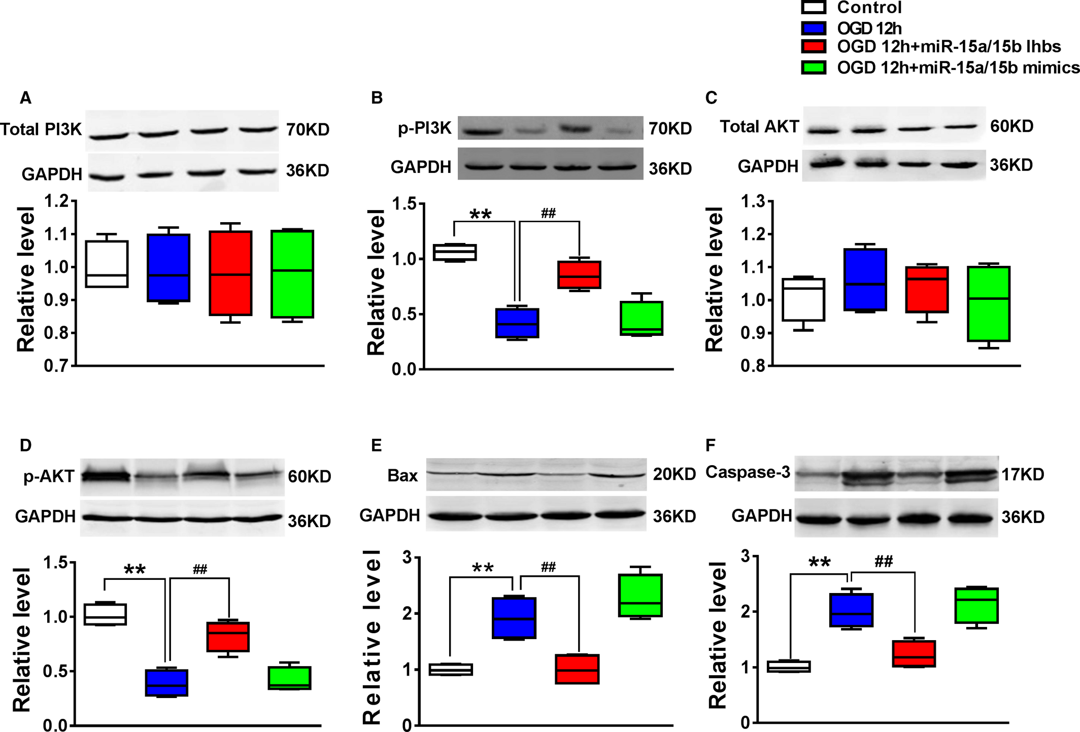 miR‐15a/15b Cluster Modulates Survival of Mesenchymal Stem