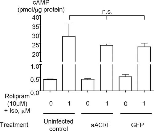 Soluble Adenylyl Cyclase Reveals the Significance of cAMP