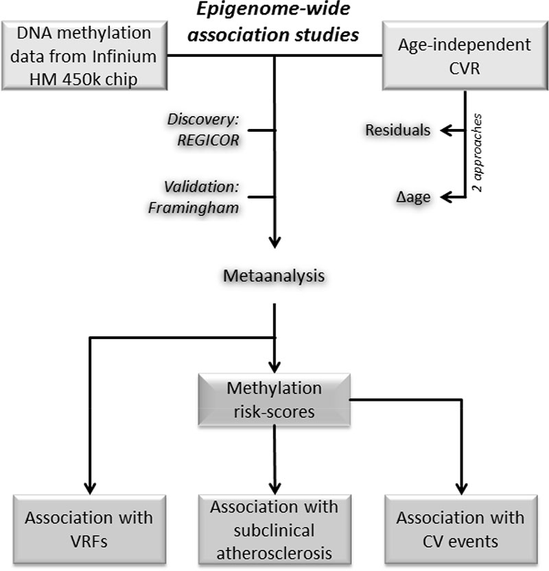 Editorial Sharing Epigenomes Globally >> Dna Methylation And Age Independent Cardiovascular Risk An