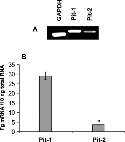 Role of the Sodium-Dependent Phosphate Cotransporter, Pit-1, in