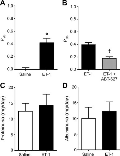 Endothelin-1 Increases Glomerular Permeability and