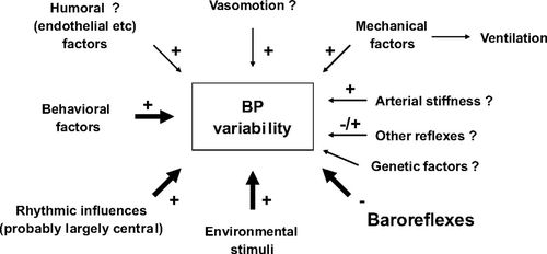Short- and Long-Term Blood Pressure Variability | Hypertension
