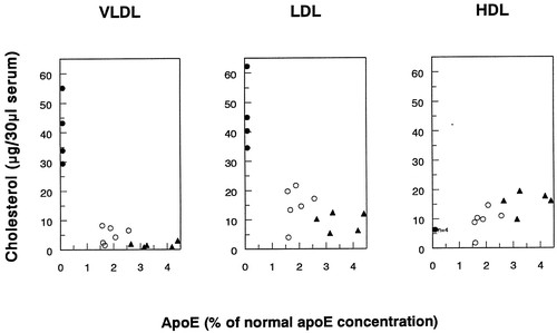 Bone Marrow Transplantation in Apolipoprotein E–Deficient