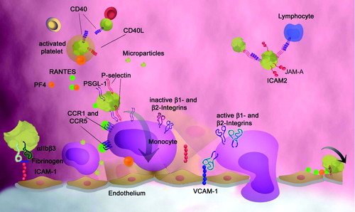 Platelets as Immune Cells   Circulation Research
