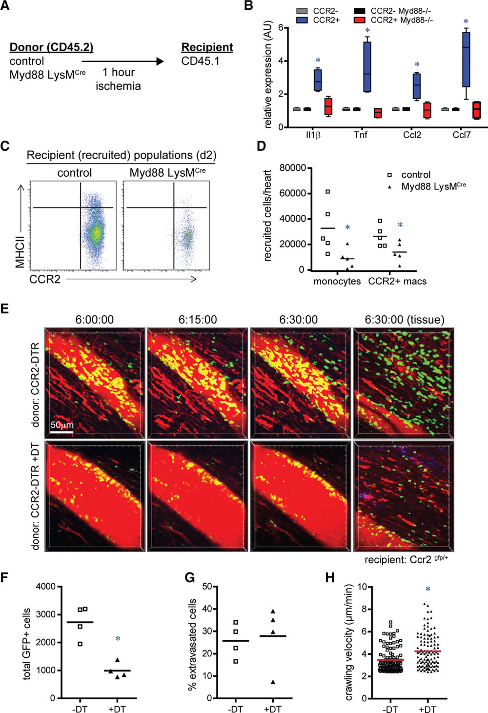 Tissue Resident CCR2− and CCR2+ Cardiac Macrophages Differentially
