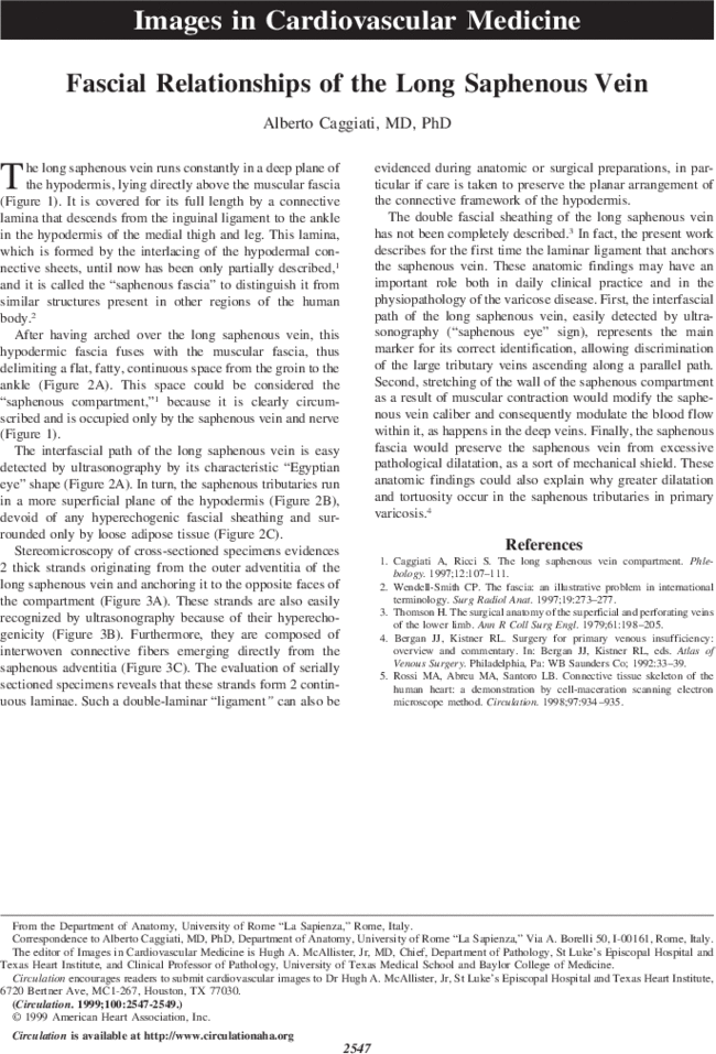Fascial Relationships Of The Long Saphenous Vein Circulation
