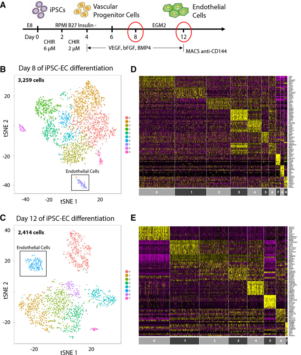 Large-Scale Single-Cell RNA-Seq Reveals Molecular Signatures