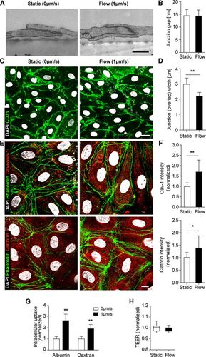 Transcellular Pathways in Lymphatic Endothelial Cells