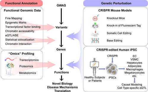 Functional Genomics and CRISPR Applied to Cardiovascular