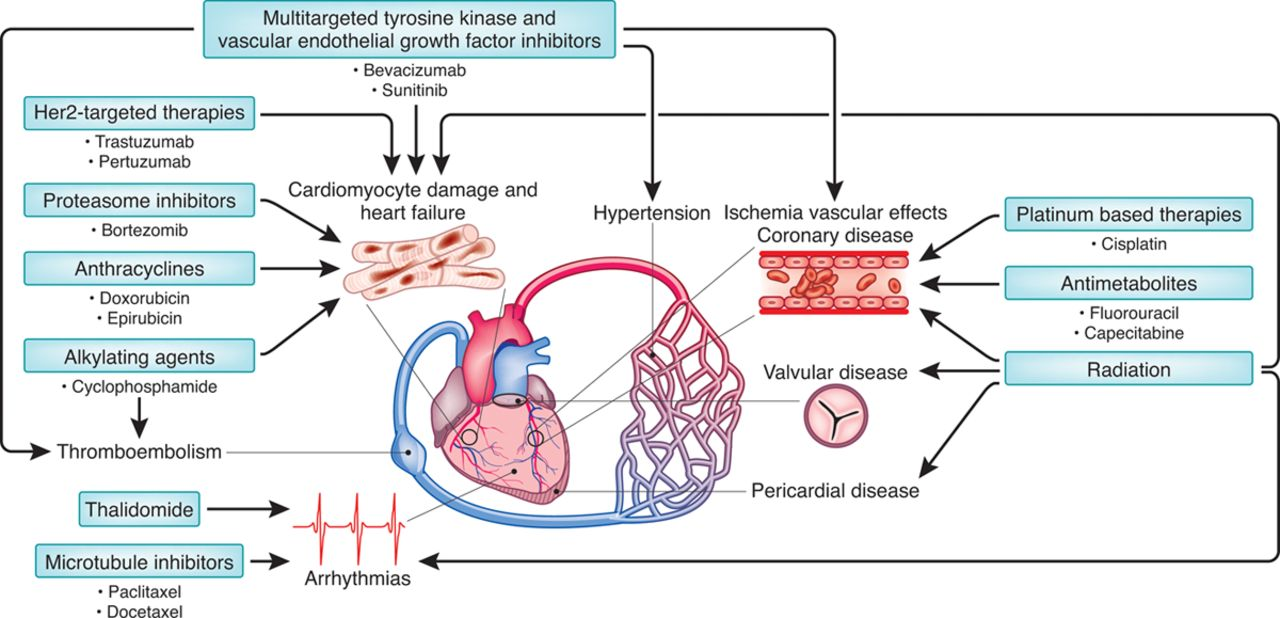 Cardio Oncology Circulation Research