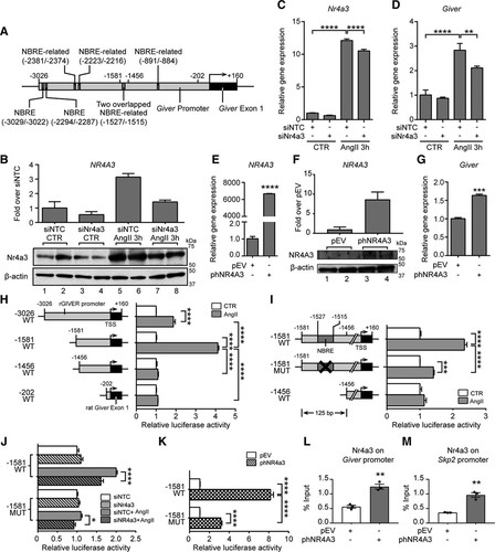 A Novel Angiotensin II–Induced Long Noncoding RNA Giver