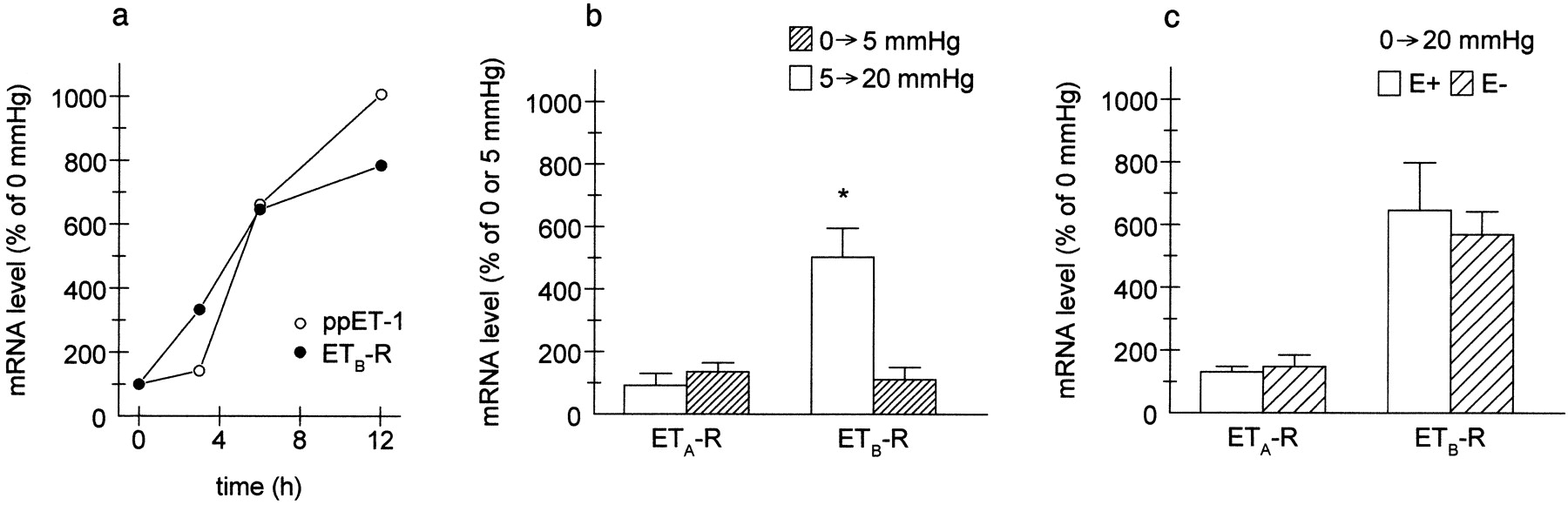Pressure-Induced Upregulation of Preproendothelin-1 and Endothelin B
