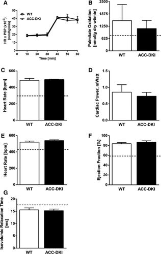 AMPK-Dependent Inhibitory Phosphorylation of ACC Is Not