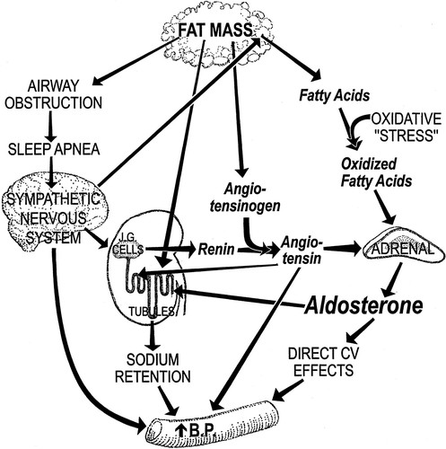 Resistant Hypertension Obesity Sleep Apnea And Aldosterone