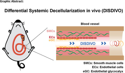 Vascular Bed Molecular Profiling by Differential Systemic