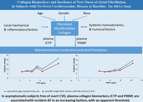 Collagen Biomarkers and Incidence of New Onset of Atrial