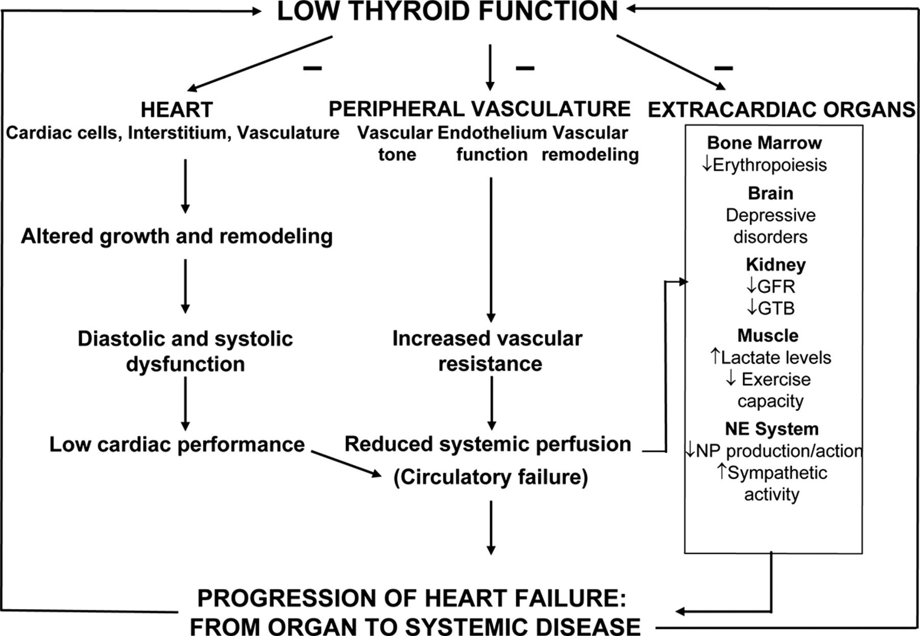 Thyroid Replacement Therapy and Heart Failure   Circulation