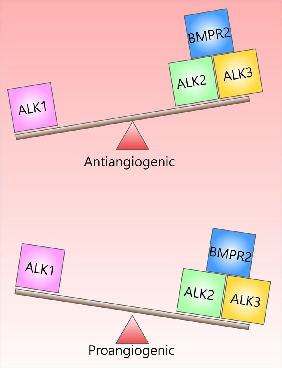 Alk2/ACVR1 and Alk3/BMPR1A Provide Essential Function for Bone