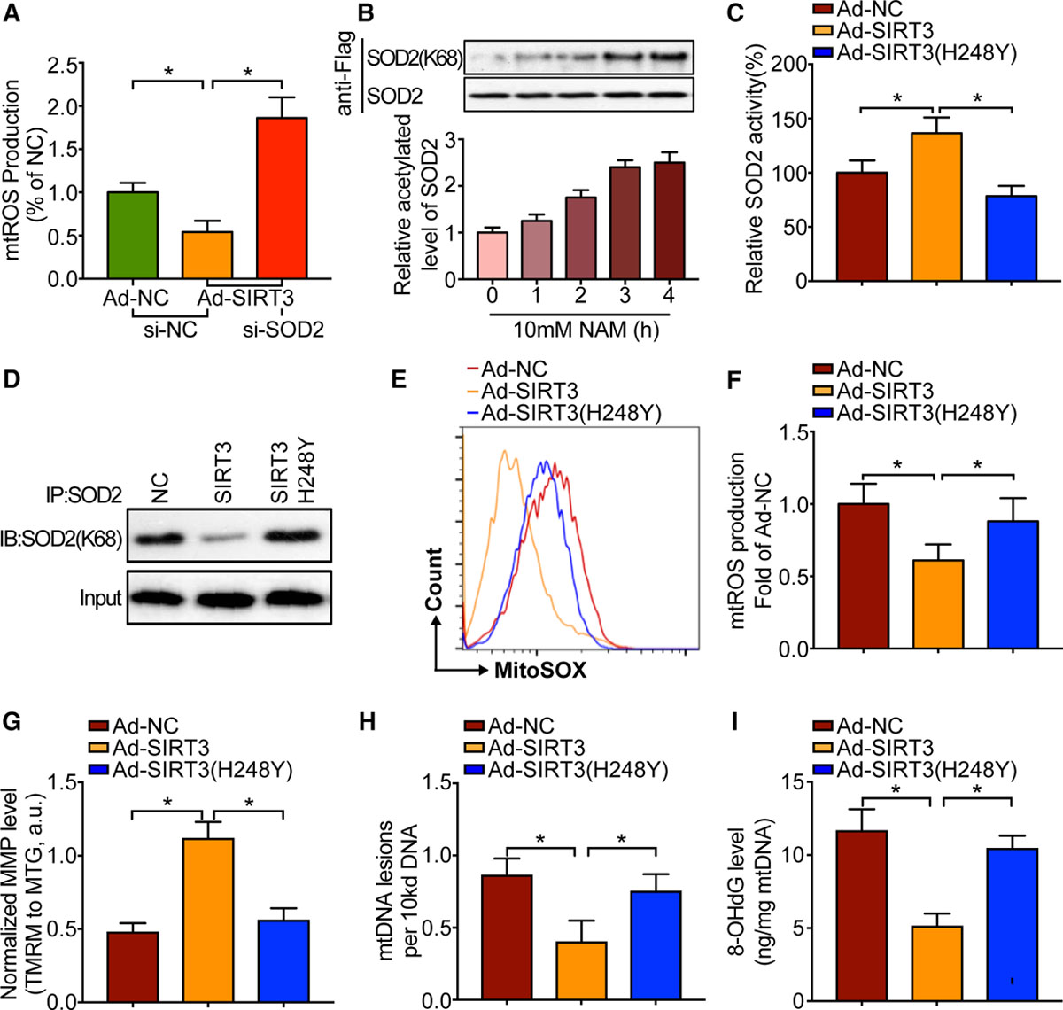 Inhibition of Mitochondrial Oxidative Damage Improves