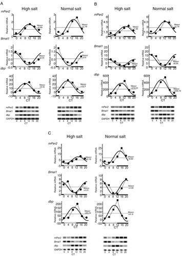 Alterations of Circadian Expressions of Clock Genes in Dahl