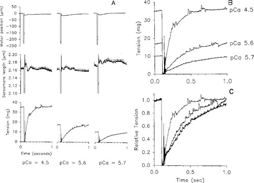 Rate Of Tension Development In Cardiac Muscle Varies With Level Of