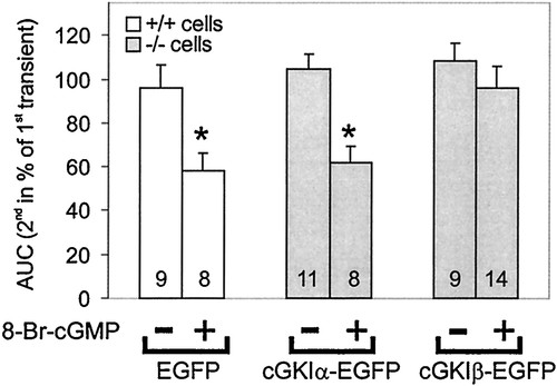 Functional Reconstitution of Vascular Smooth Muscle Cells With cGMP