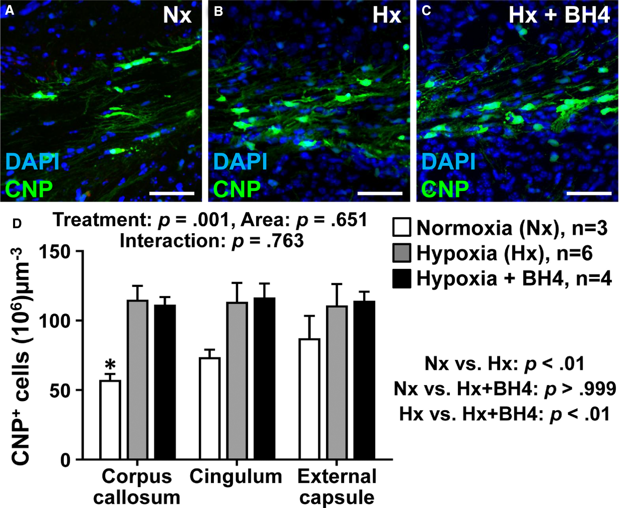 Treatment With Tetrahydrobiopterin Improves White Matter