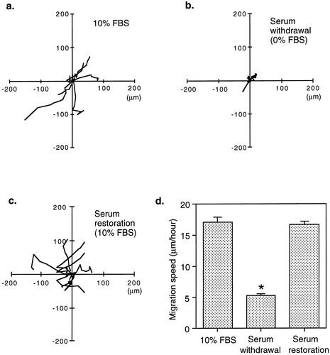 Evidence From a Novel Human Cell Clone That Adult Vascular Smooth