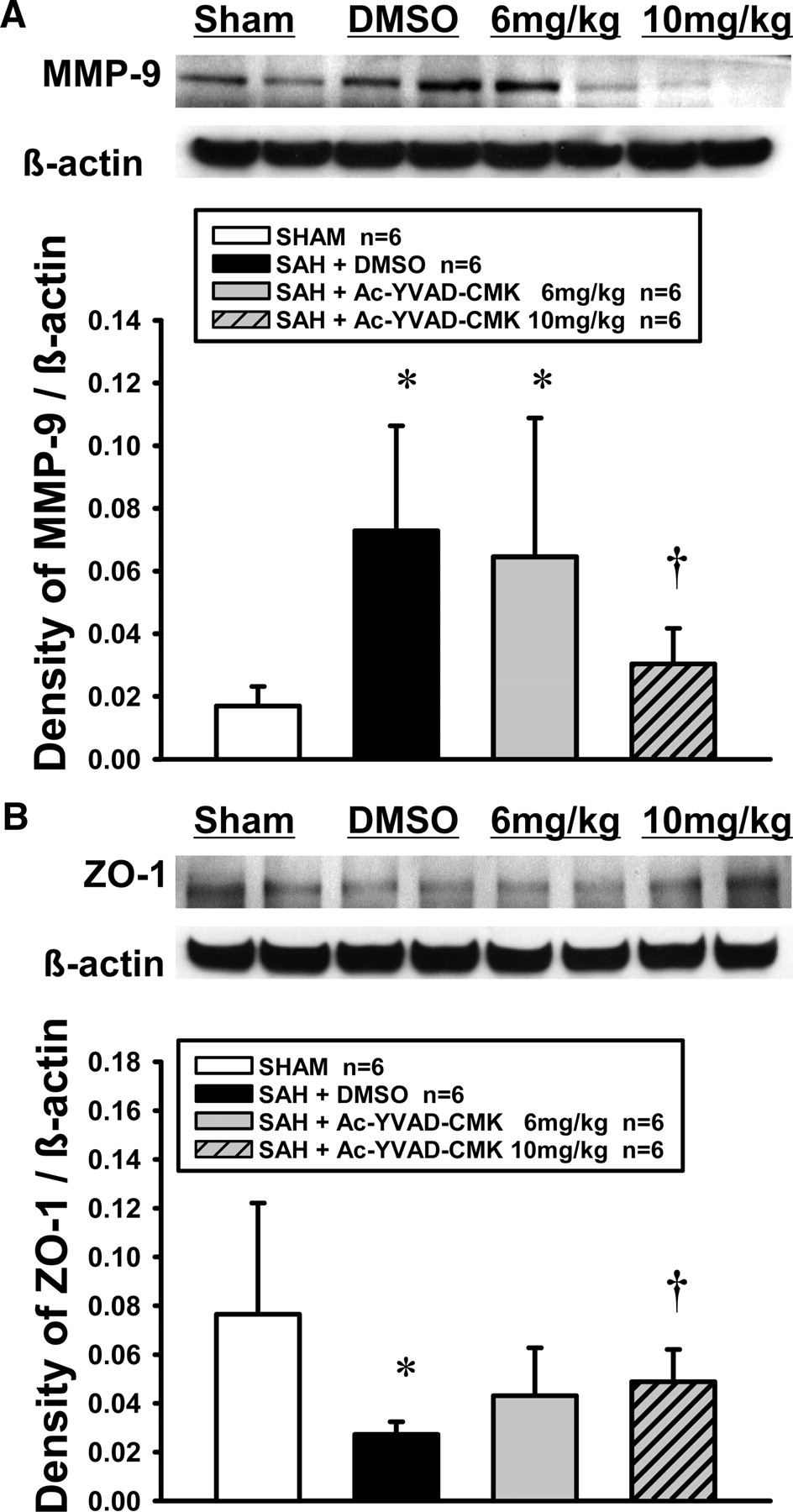 Role of Interleukin-1β in Early Brain Injury After Subarachnoid