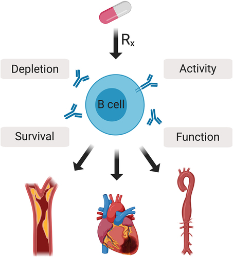 Impact of B-Cell–Targeted Therapies on Cardiovascular